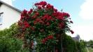 piękny_ogród_4