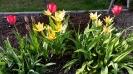 wiosna w ROD_1