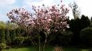 wiosna w ROD_4