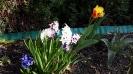 wiosna w ROD_5